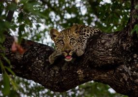 Richard Branson's properties, Vacation Rental, Listing ID 2261, Sabi Sand Game Reserve, Kruger National Park, South Africa, Africa,