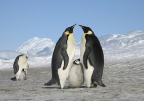 Luxury Camps, Vacation Rental, Listing ID 1366, South Pole, Antarctic Peninsula, Antarctica,